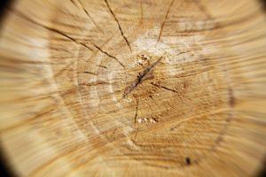 Norwegen Holz